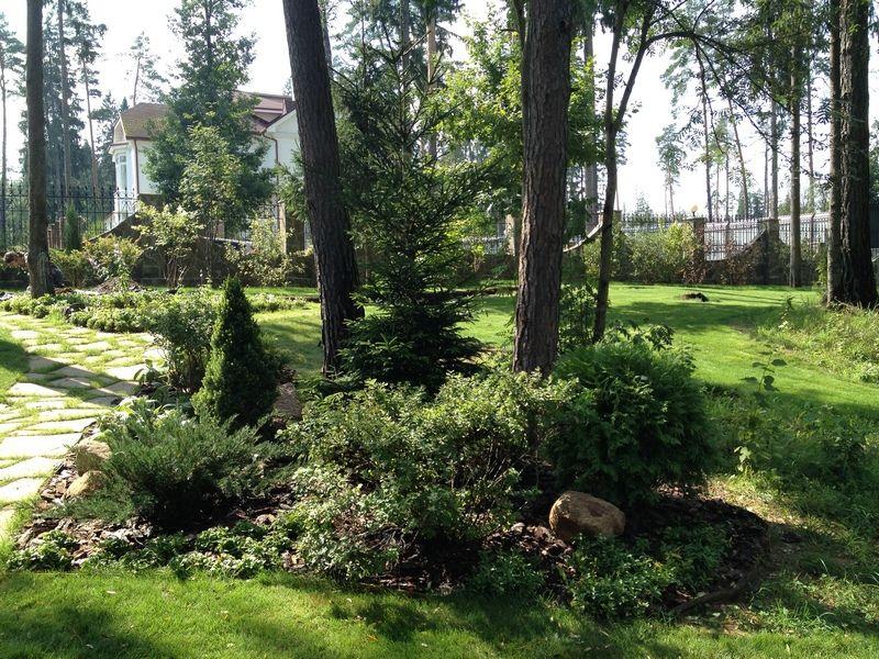 Деревья и кусты в экосаду