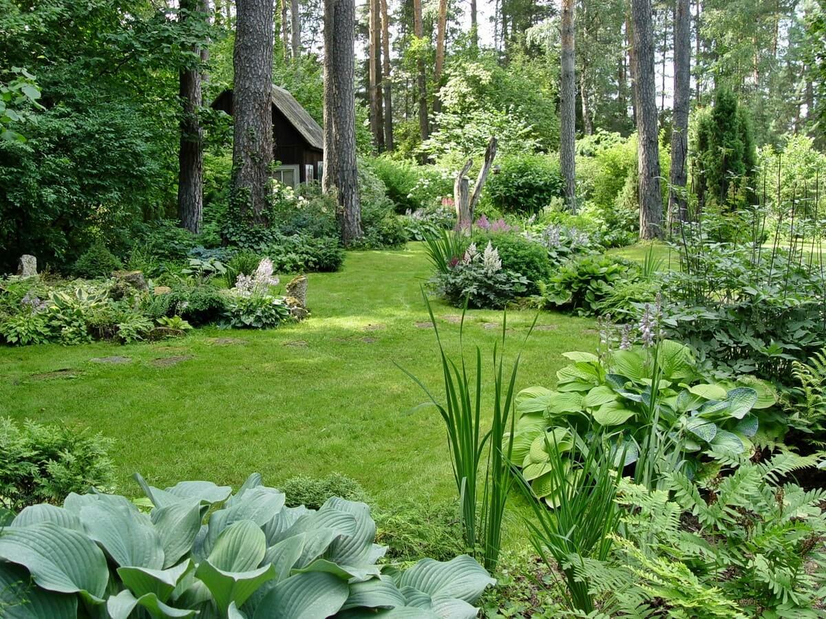 Растения и травы в экосаду
