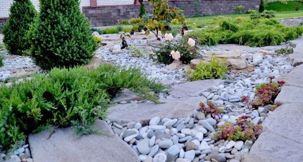 Растения для рокария - фото