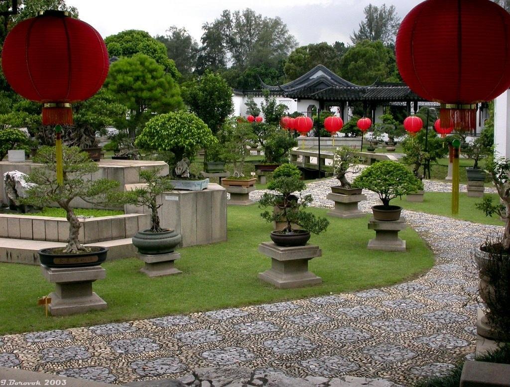 Растения в китайском саду