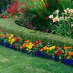 Бордюр из цветов фото