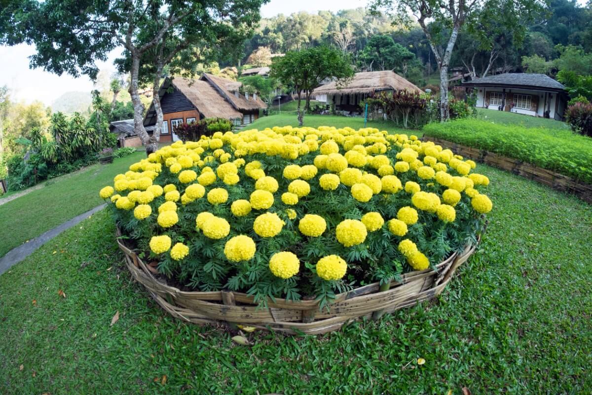 Монохромные цветники для сада принципы создания уход